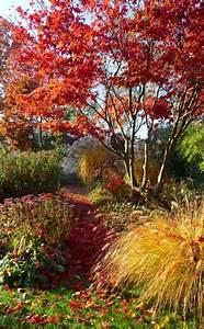 Die Schönsten Steingärten : diese ziergr ser sorgen im herbst f r farbe anja hecke pinterest felsenbirne leuchtende ~ Bigdaddyawards.com Haus und Dekorationen
