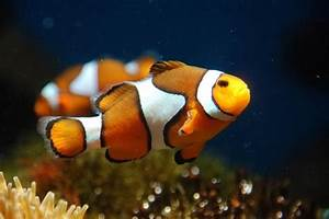 Aquarium Fische Süßwasser Liste : rollirentner adl kullan c n n colorful fish panosundaki pin ~ Watch28wear.com Haus und Dekorationen