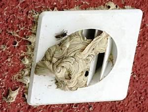 Gift Für Wespen : die gemeine wespe september 2014 torfwiesenau ~ Whattoseeinmadrid.com Haus und Dekorationen