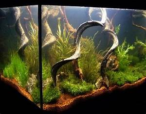 Aquarium Dekorieren Ideen : bepflanzungsbeispiele f r aquarien aquascape pinterest ~ Bigdaddyawards.com Haus und Dekorationen