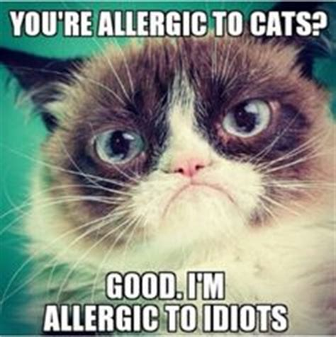 Angry Cat Good Meme - 60 angry cat funny memes for whatsapp