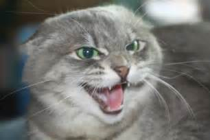 why is my cat hissing at me 24 171 february 171 2012 171 the modern jedi