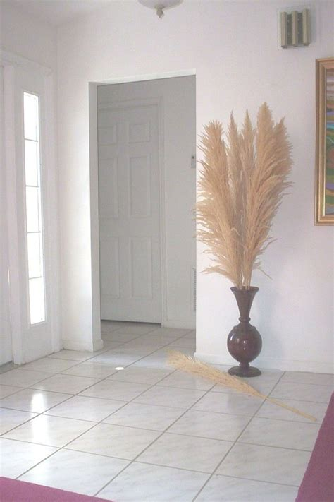 dried plumes dried natural pampas grass  feet tall