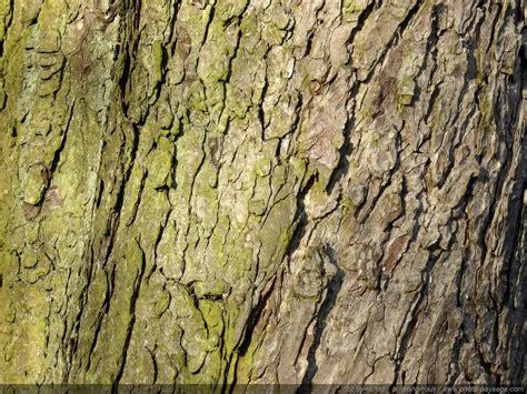 le tronc d arbre 28 images tronc d arbre photographie stock libre de droits image 31395827