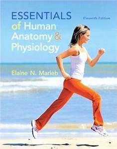 Free Download Essentials Of Human Anatomy  U0026 Physiology