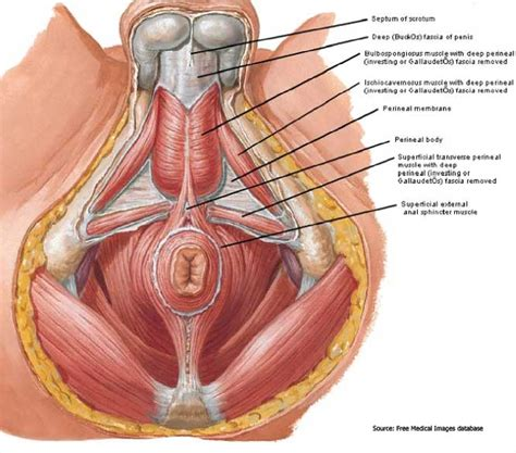some thoughts on the pelvis art of thai massage
