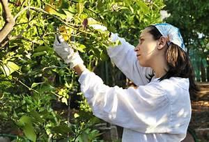 Dünger Für Zitronenbaum : tipps f r hobbyg rtner so bauen sie ihre eigenen zitronen an ebay ~ Watch28wear.com Haus und Dekorationen