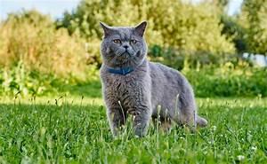 Il Gatto e il suo istinto da predatore Blog Gatti