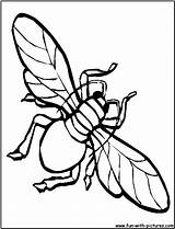 Coloring Housefly Fly Printable Fun Larger Printablecolouringpages Credit Sketch sketch template