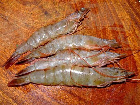 cuisiner gambas crues pourquoi les crevettes cuites sont rouges et les saumons