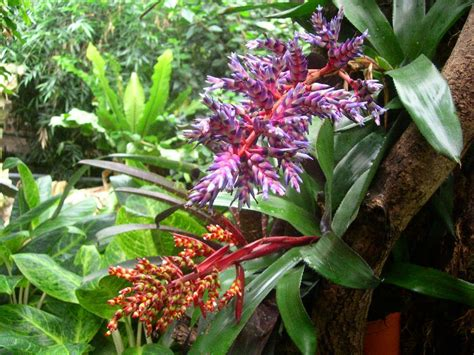 Tropical Rainforest Biome Plants
