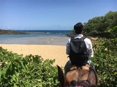 horseback rico puerto riding manati tripadvisor beach