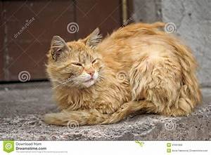 Homeless Cat Royalty Free Stock Image - Image: 31691806