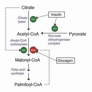 Viii  Lipids  Transport  Deposition  And Metabolism  U2013 A