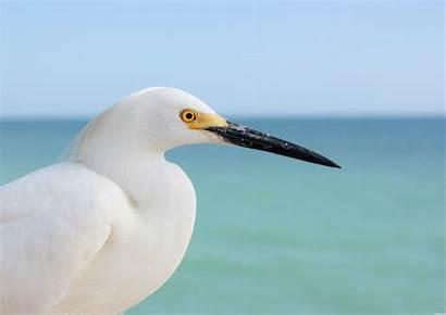 Bird Song Lyrics Pxleyes Jooinn Variants