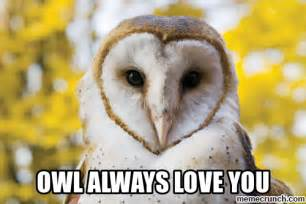 Owl Always Love You Meme