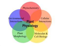 plant physiology - Principles Of Environmental Science Wikipedia