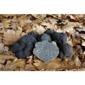 cuisiner les truffes fraiches truffes noires fraiches morceaux tuber mélanosporum