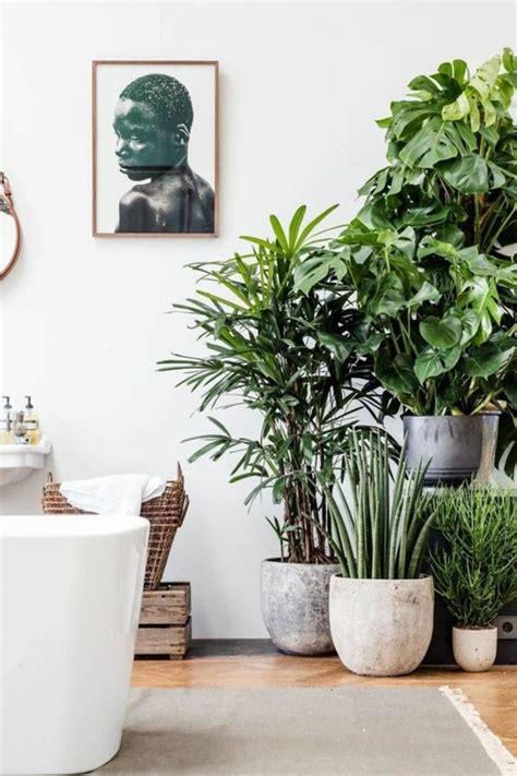 Große Pflanzen Für Innen by Inspirierende Dekoideen Kleiner Innen Gartenbereich