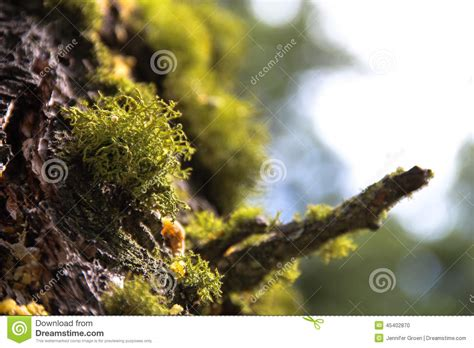 mousse verte sur le tronc d arbre 2 photo stock image