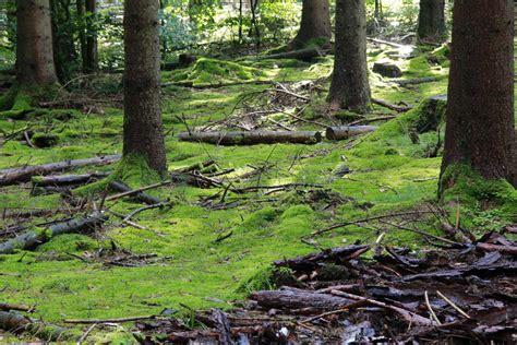 Die Farbe Grün by Die Farbe Gr 252 N Foto Bild Anf 228 Ngerecke Nachgefragt