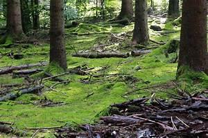 Die Farbe Grün : die farbe gr n foto bild anf ngerecke nachgefragt nachgefragt landschaft natur bilder ~ A.2002-acura-tl-radio.info Haus und Dekorationen