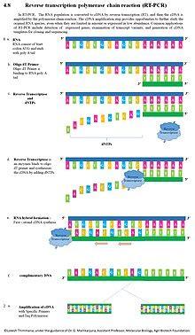 reverse transcription polymerase chain reaction wikipedia