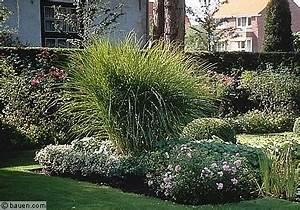 Ich Suche Garten : ich suche zwei bestimmte pflanzen f r meinen garten die ~ Whattoseeinmadrid.com Haus und Dekorationen