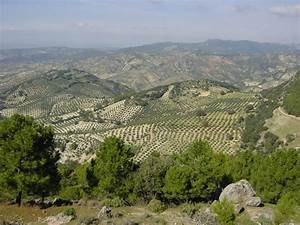 A Spanish Olive Oil Mill In Almeria Making The Best Olive Oil
