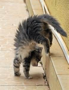 cat gymnastics 1000 images about cat gymnastics on