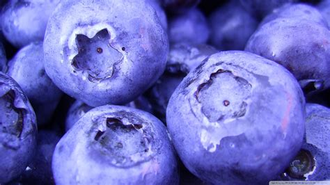 blueberry wallpaper  wallpoper