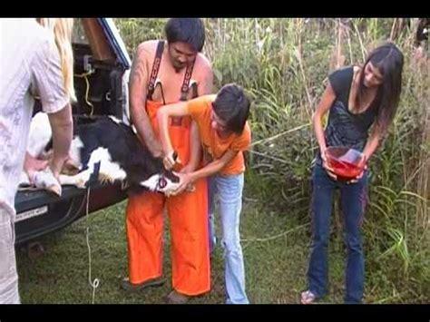 calf kill youtube