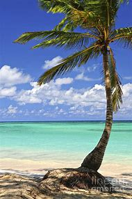 Tropical Island Beach Art