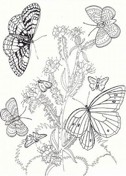 Coloring Butterfly Flower Printable Imprimir Butterflies Flowers