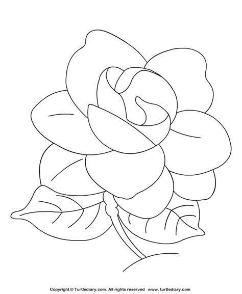 Gardenia Drawing by Gardenia Coloring Sheet Turtle Diary