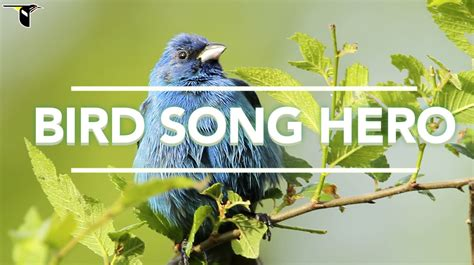 bird song hero an interactive game that teaches users how