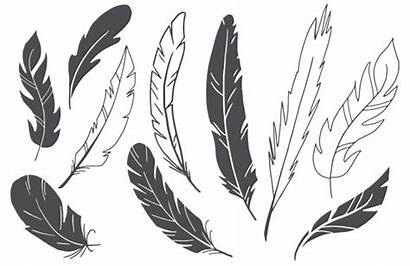 Vector Drawn Feathers Hand Graphics Vectors Favs