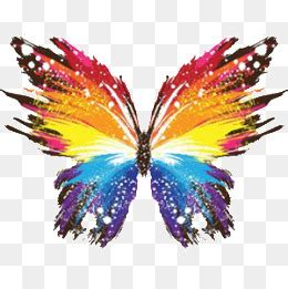 rainbow butterfly png images vectors  psd files