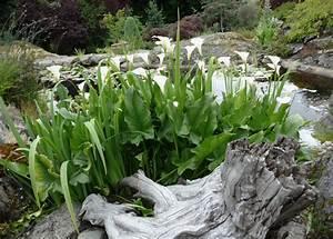 Plantes Vivaces Autour D Un Bassin : fleurs qui poussent dans les cailloux ~ Melissatoandfro.com Idées de Décoration