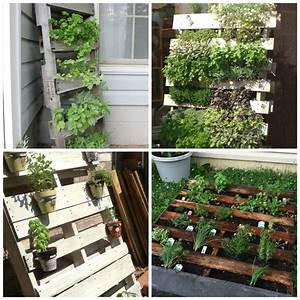 Herb, Container, Gardening, Tips