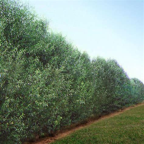 fast growing tree nursery review thenurseries