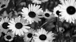 Flowers Clipart Black And White Panda Free Images Flower ...