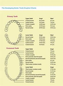Deciduous Teeth Eruption Chart Tooth Eruption Chart How Is Your Child Progressing