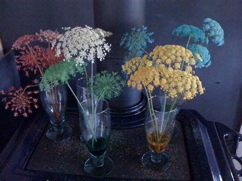 dyed queen annes lace place flower stems  water