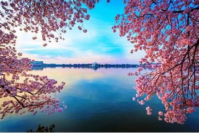Blossom Cherry Wallpapers Tree Pink Lake Desktop