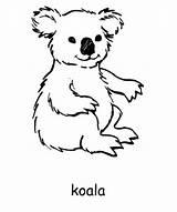 Koala Colouring Coloring Australia Pages Printable Animal Sheets Koalas Kangaroo Australian Bear Animals Craft Activity Activityvillage Aussie Fun Card Printables sketch template