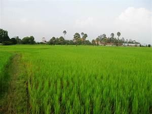Rice Fields Cambodia » Keteka