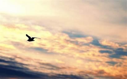 Freedom Flying Bird Sky Silhouette Gull Birds