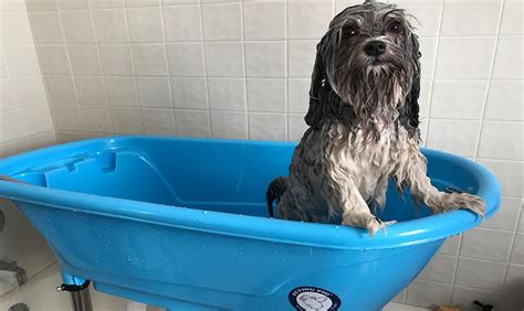 Bathtubs For Dogs by The Best Bathtubs The Pet Grooming