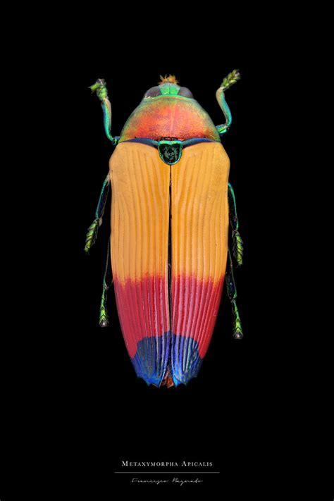 colorful insects stunning pictures of colorful insects 99inspiration